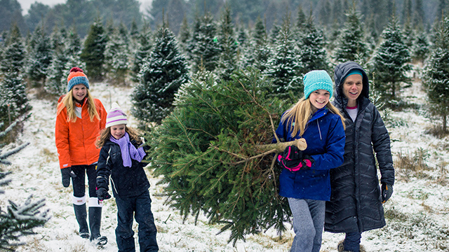 Family selecting tree at tree farm