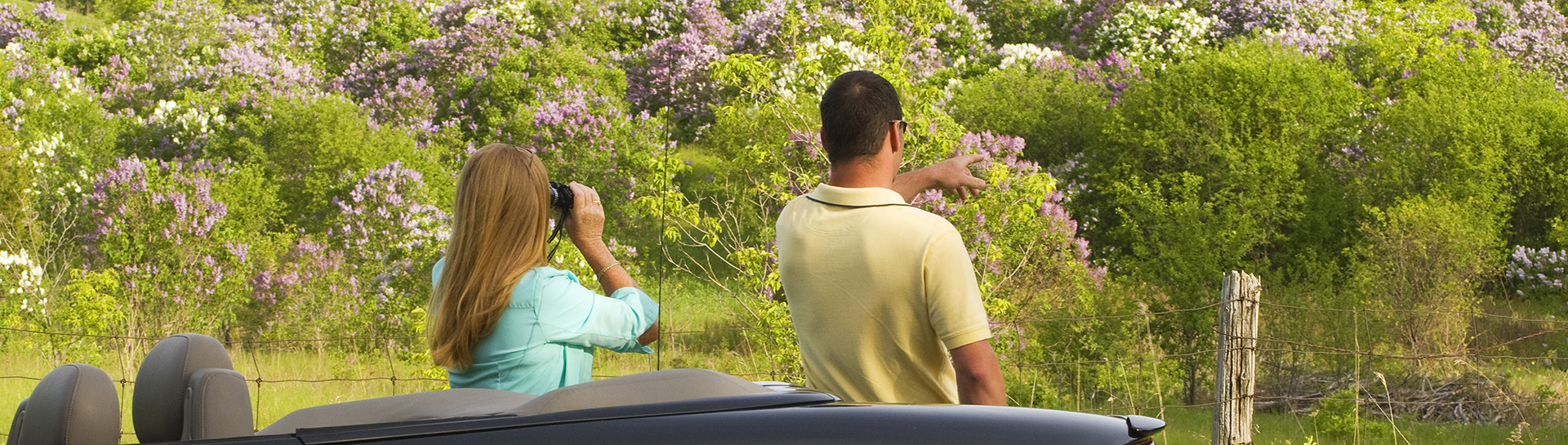 Two people looking at lilacs in bloom