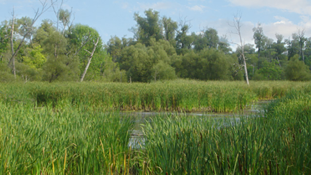 pond at Millennium Conservation Area