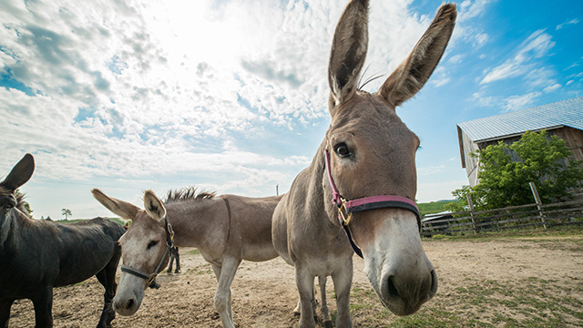 Donkeys outside