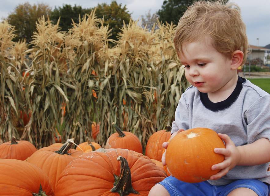 Young child in pumpkin patch