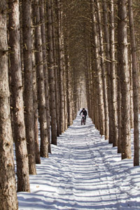 cyclist on snowy trail lined by pines