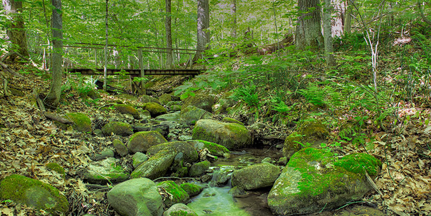 Forest and river in a valley with a bridge crossing the river