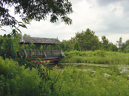 Wooden covered bridge over pond in wildlife reserve with trees surrounding pond
