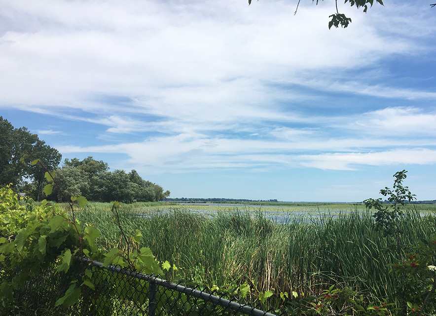 View of Presqu'ile Marsh from trails