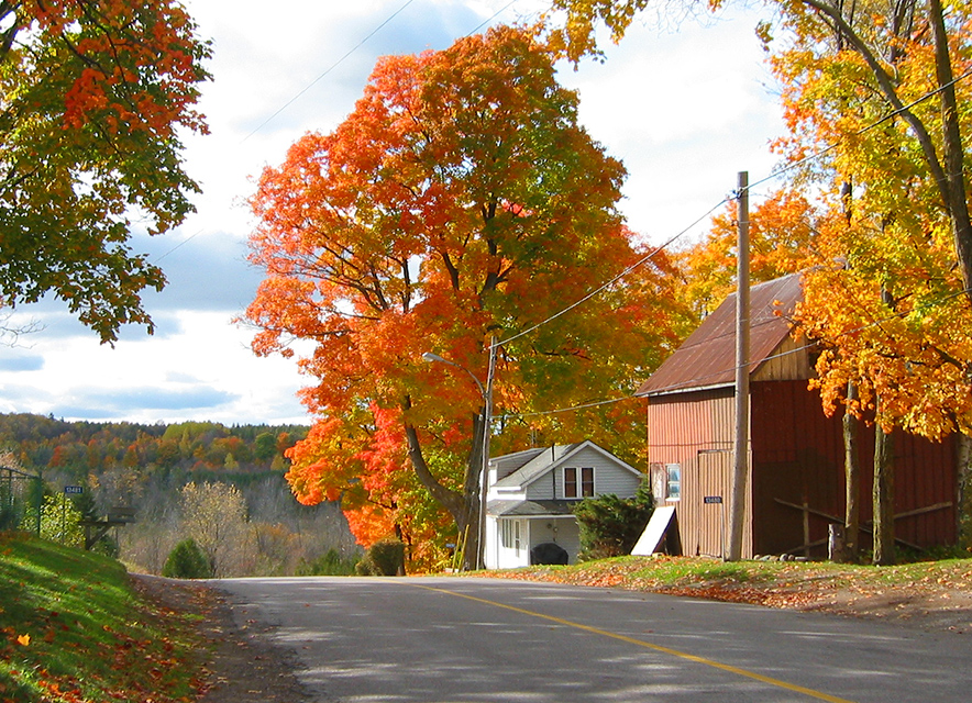 Fall colours on trees on country road with houses