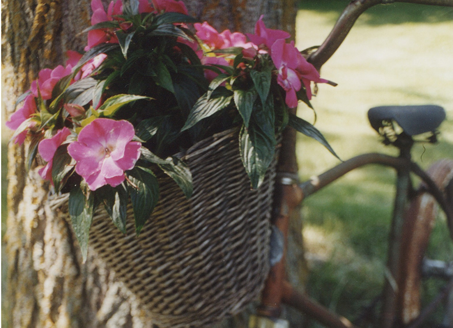 Flowers in basket on old bike leaning against tree