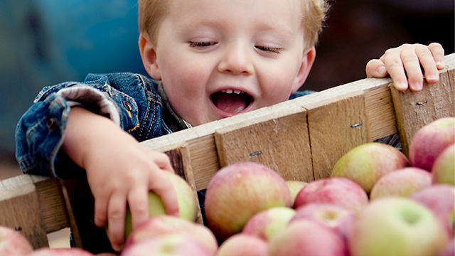 Boy reaching for apples in wooden crate