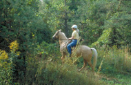 woman on a horse on a forested trail