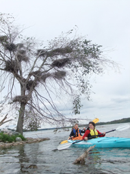 kayakers paddling at island with cormorant nests