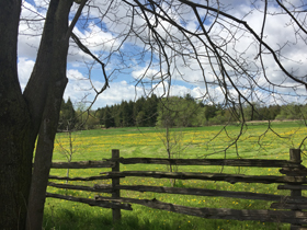 farm field beyond cedar rail fence