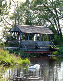 swans in pond and covered bridge