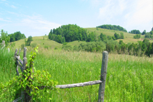 Rolling hills in summer at nature reserve